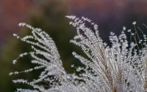 flora_by_marek_koteluk