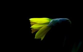 spring_by_peter_apas