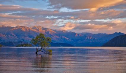 wanaka_tree_by_stephane_pakula